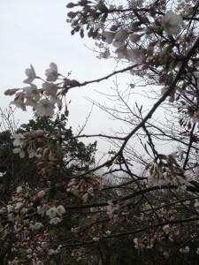 写真 2013-03-24 12 58 09